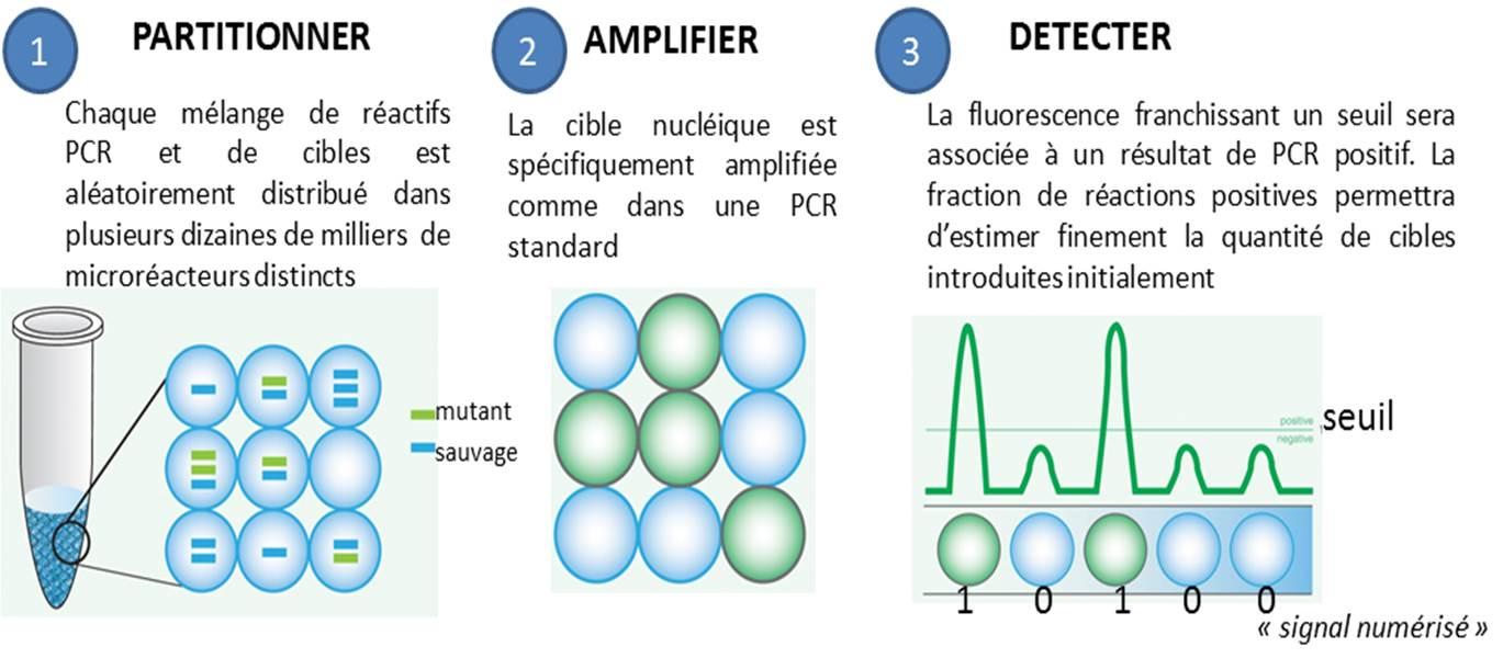 principe général de la PCR numérique